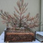 sequoia-012311-1