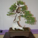 rebs-bonsai-show-21011-11