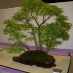 rebs-bonsai-show-21011-22