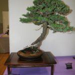 rebs-bonsai-show-21011-33