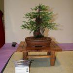 rebs-bonsai-show-21011-43