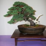 rebs-bonsai-show-21011-45