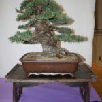 rebs-bonsai-show-21011-52