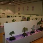 rebs-bonsai-show-21011-59