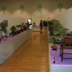 rebs-bonsai-show-21011-62
