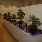 rebs-bonsai-show-21011-65