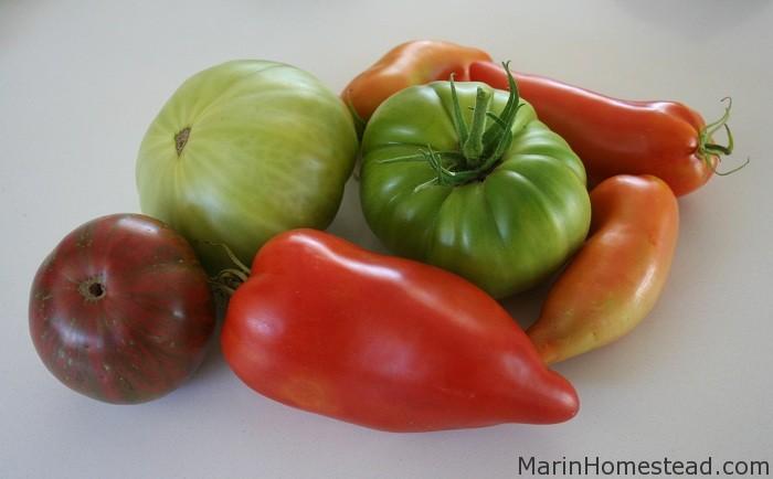 New Tomato Varieties 2012 Marin Homestead