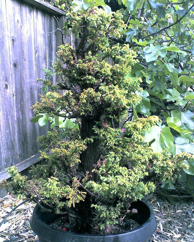 Mini Stump Grinder Baumstumpffrse Multione Bobcat Sg30