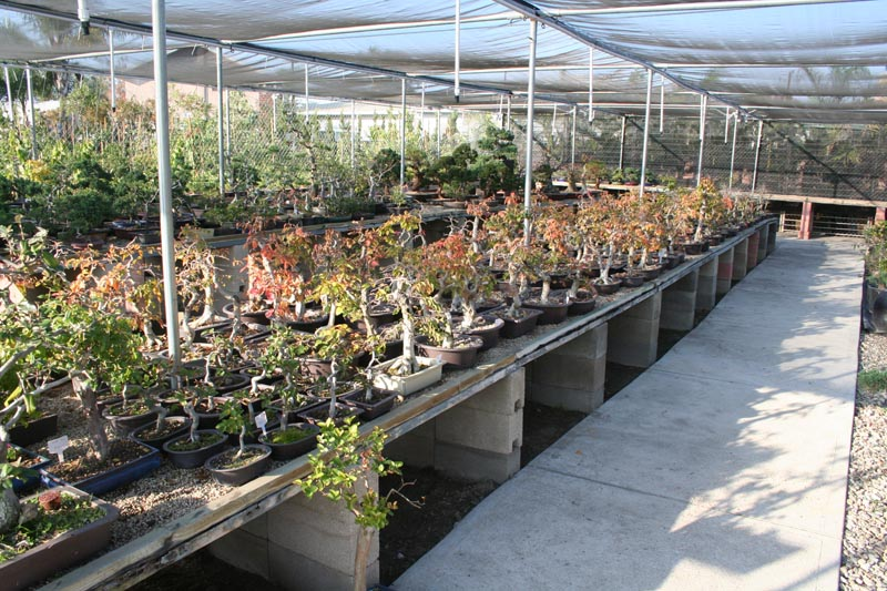 Between Los Angeles Orange County We Are The Largest Importer Grower Of Bonsai In Us Also Have Anese Garden Supplies And Offer