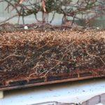 sequoia-012311-2