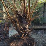 elm-dig-roots
