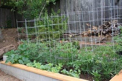 Garden Update May 30, 2009