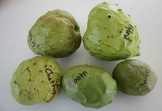 Cherimoya Review: Selma, Dr. White, Chaffey, Booth, Hybrid