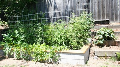 Cinderblock & Wood Garden Update: June 25, 2009 (2 months)