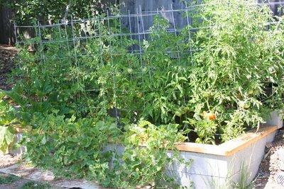 Garden Update: July 25, 2009 (3 months)