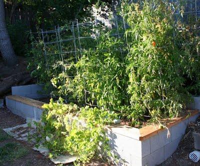 Garden Update: August 23, 2009 (4 months)