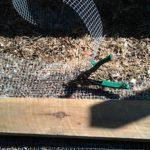 chicken-coop-building-065