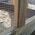 chicken-coop-building-074