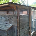 chicken-coop-building-092