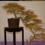 rebs-bonsai-show-21011-01