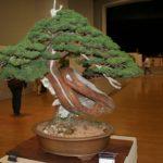 rebs-bonsai-show-21011-08
