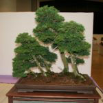 rebs-bonsai-show-21011-09