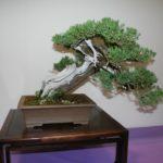 rebs-bonsai-show-21011-25