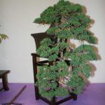 rebs-bonsai-show-21011-30