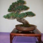 rebs-bonsai-show-21011-38