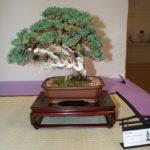 rebs-bonsai-show-21011-40