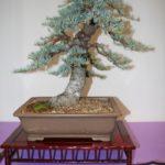 rebs-bonsai-show-21011-53