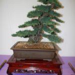 rebs-bonsai-show-21011-55