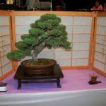 rebs-bonsai-show-21011-56