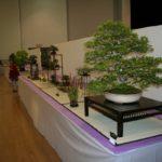rebs-bonsai-show-21011-61