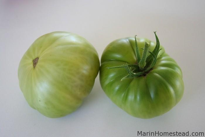 New Tomato Varieties 2...