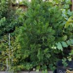 cedar-inground061517