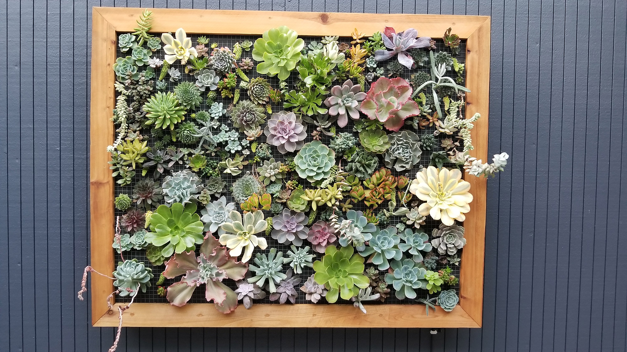 Vertical Succulent Wall Planter